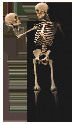 esqueleto con calavera a lo Hamlet